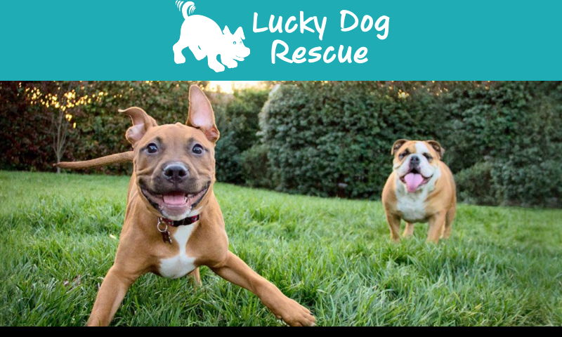 1luckydogrescue.org.jpg