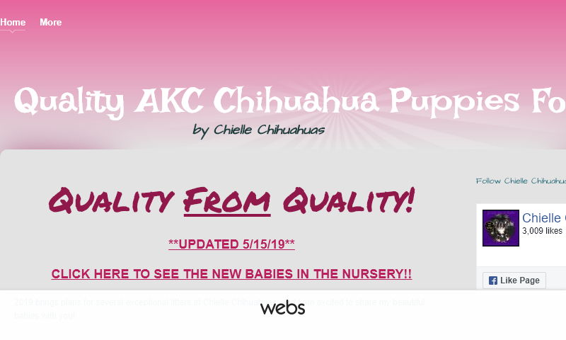akcchihuahuapuppiesforsale.com