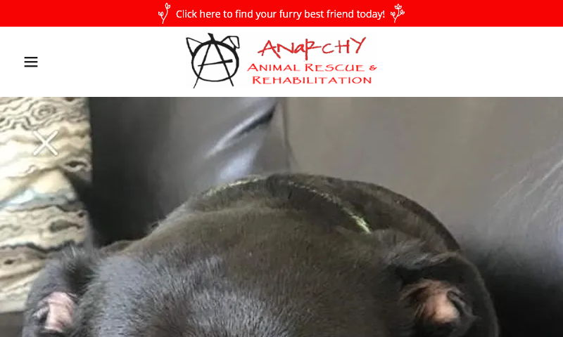 anarchyanimalrescue.org