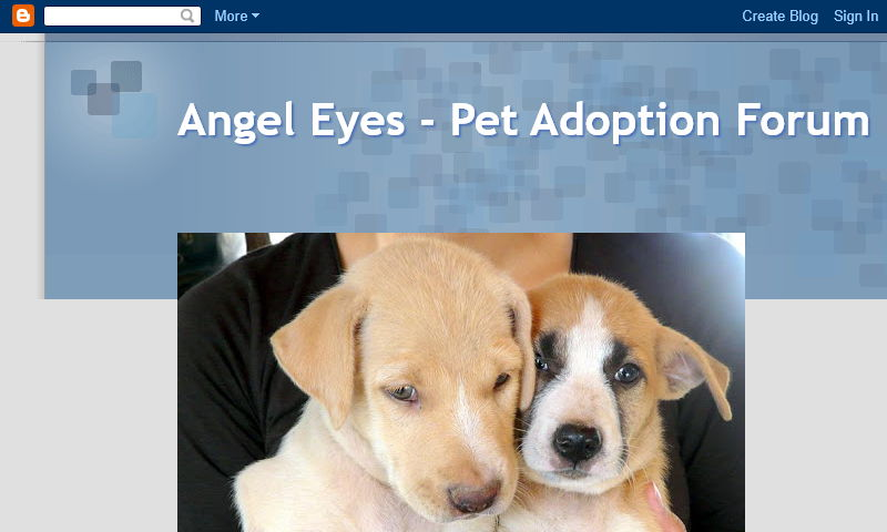 angeleyespetadoption.blogspot.com