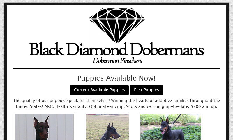 blackdiamonddoberman.com