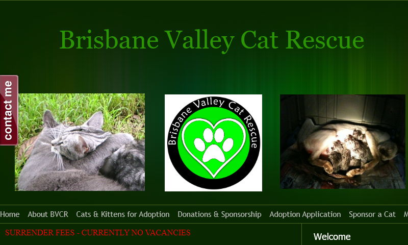 brisbanevalleycatrescue.com