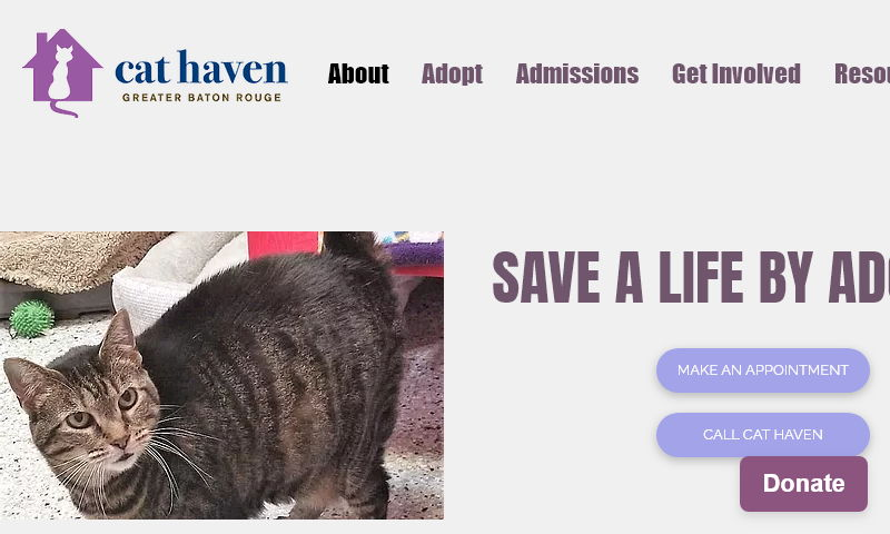 cathaven.org