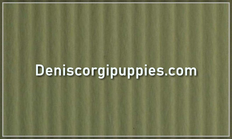deniscorgipuppies.com.jpg