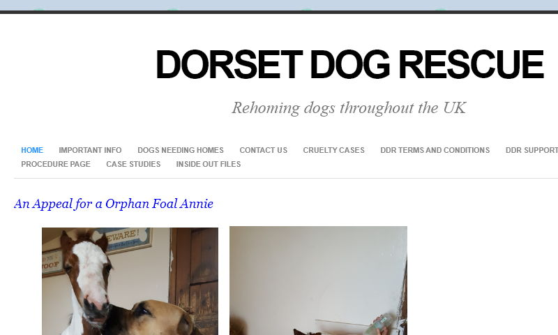 dorsetdogrescue.com