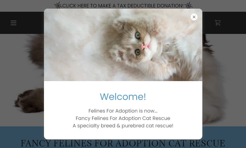 fancyfelines4adoption.org