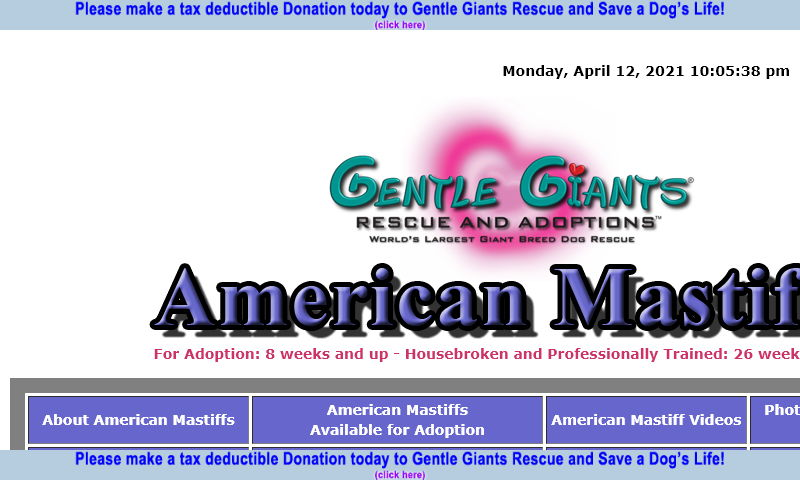 gentlegiantsrescue-american-mastiffs.com