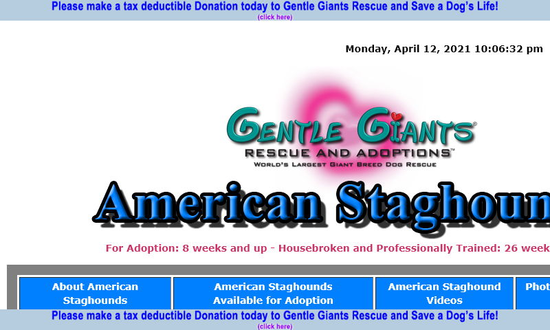 gentlegiantsrescue-american-staghounds.com