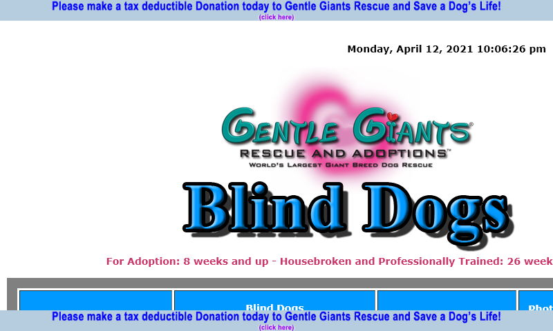 gentlegiantsrescue-blind-dogs.com