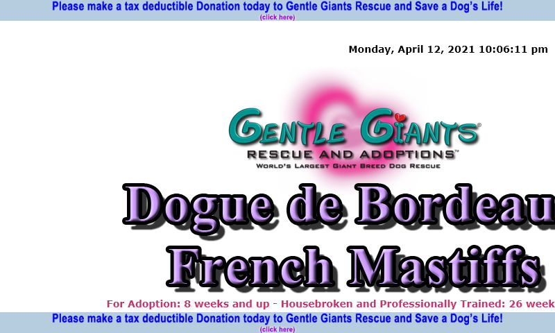 gentlegiantsrescue-dogue-de-bordeaux-french-mastiffs.com
