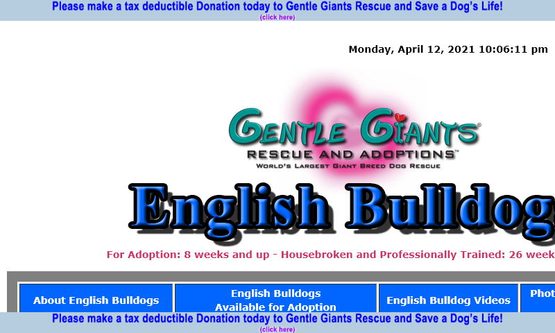 gentlegiantsrescue-english-bulldogs.com