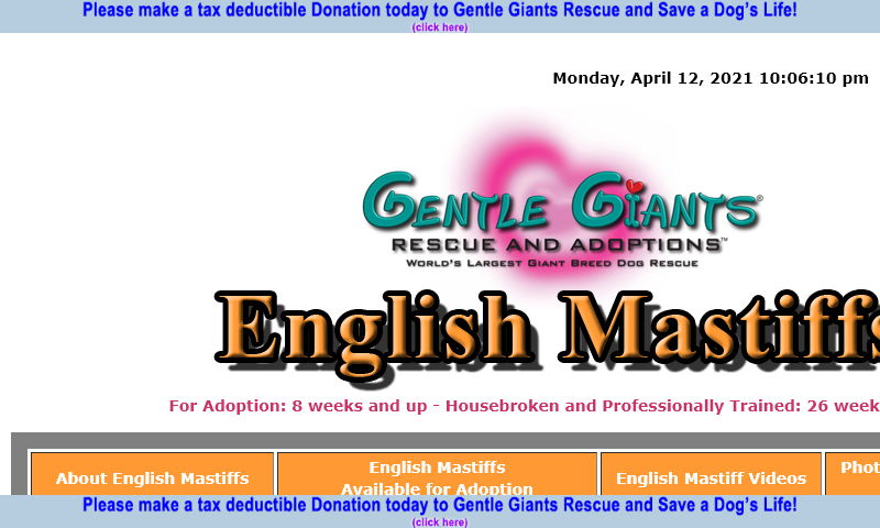 gentlegiantsrescue-english-mastiffs.com