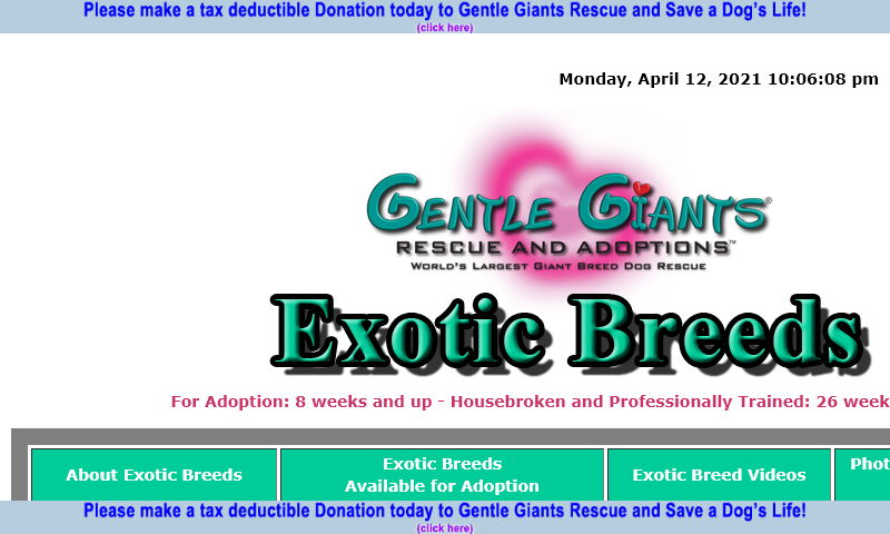 gentlegiantsrescue-exotic-breeds.com