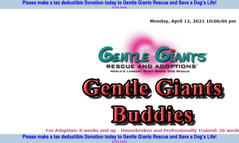 gentlegiantsrescue-gentle-giants-buddies.com