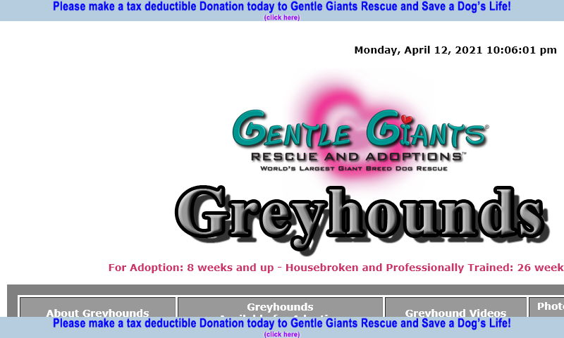 gentlegiantsrescue-greyhounds.com