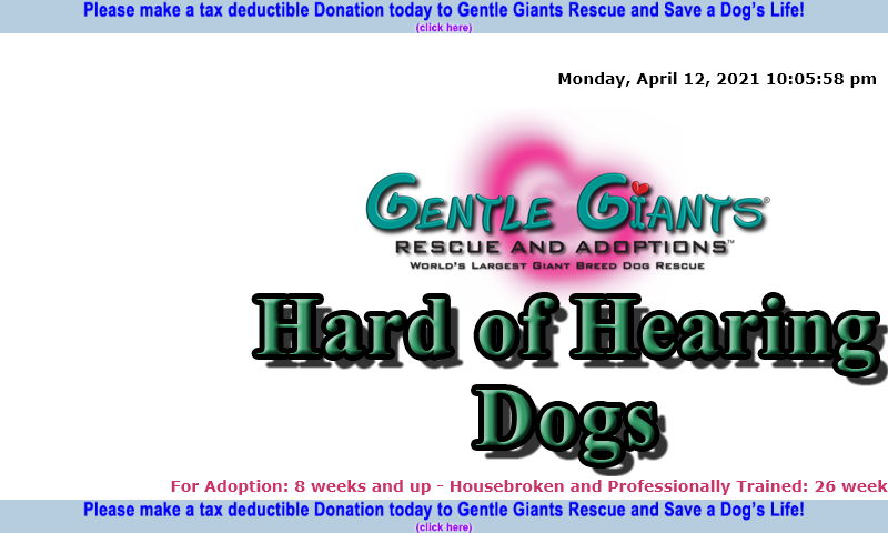 gentlegiantsrescue-hard-of-hearing-dogs.com