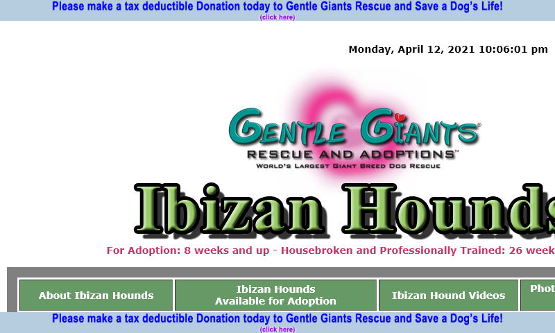 gentlegiantsrescue-ibizan-hounds.com