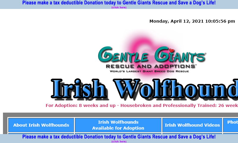 gentlegiantsrescue-irish-wolfhounds.com.jpg