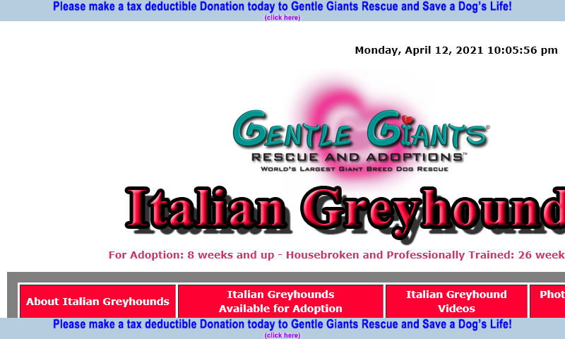 gentlegiantsrescue-italian-greyhounds.com