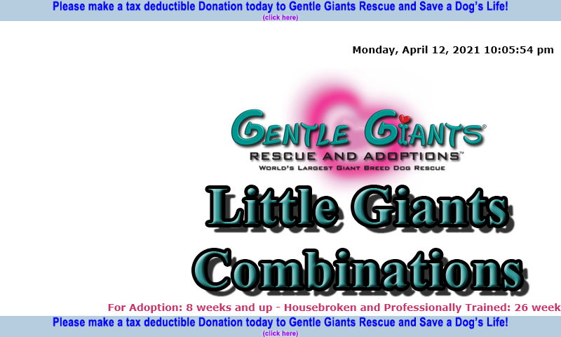 gentlegiantsrescue-little-giants-combinations.com.jpg
