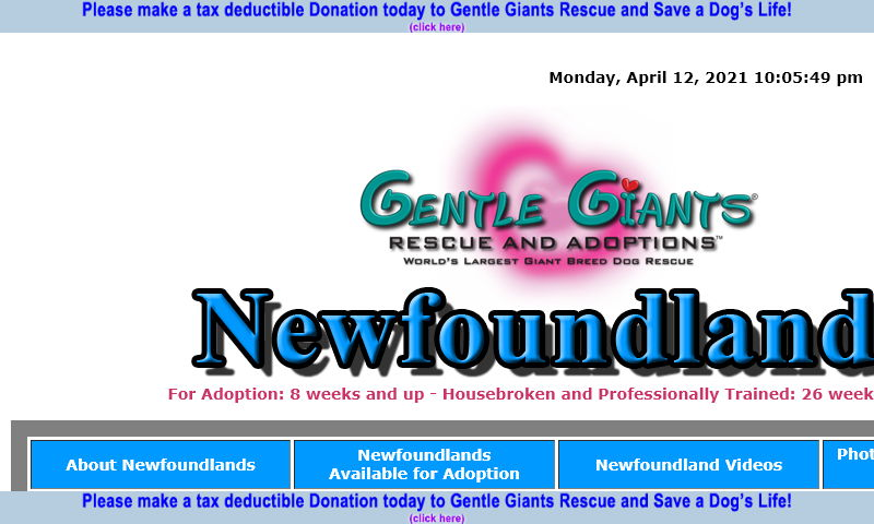 gentlegiantsrescue-newfoundlands.com.jpg