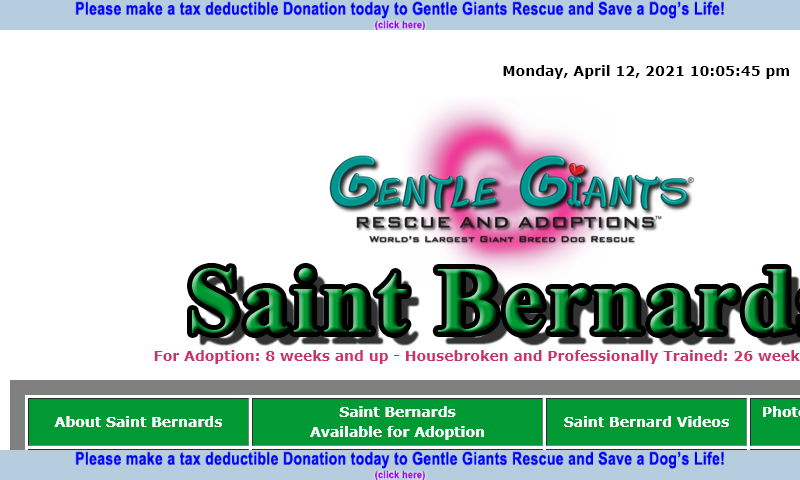 gentlegiantsrescue-saint-bernards.com.jpg