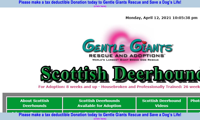 gentlegiantsrescue-scottish-deerhounds.com.jpg
