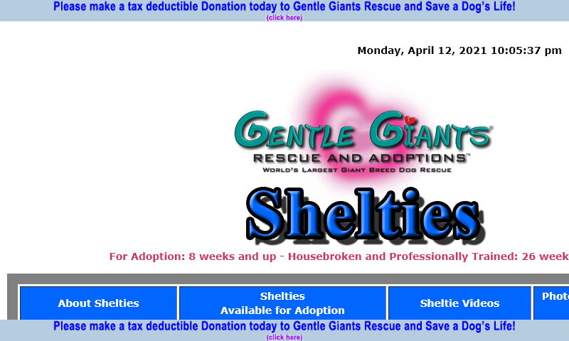 gentlegiantsrescue-shelties.com.jpg