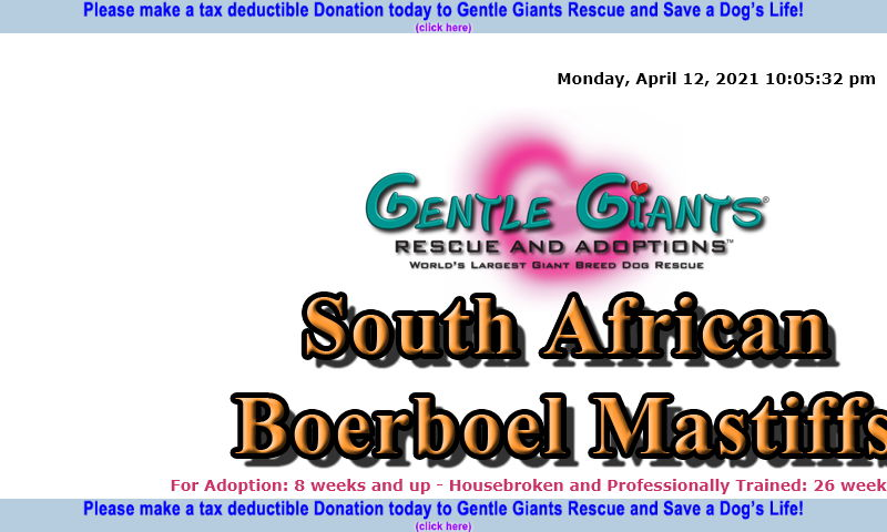 gentlegiantsrescue-south-african-boerboel-mastiffs.com.jpg
