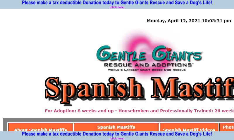 gentlegiantsrescue-spanish-mastiffs.com.jpg