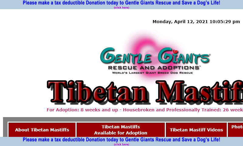 gentlegiantsrescue-tibetan-mastiffs.com.jpg