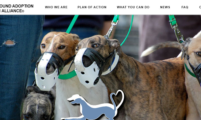 greyhoundadoptionactionalliance.org