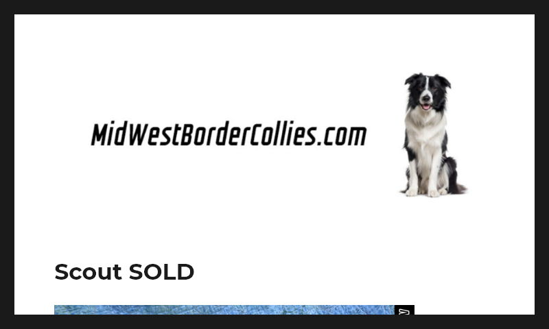 midwestbordercollies.com