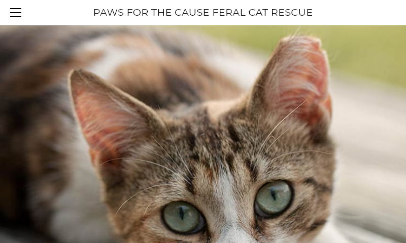 pawsforthecauseferalcatrescue.org.jpg