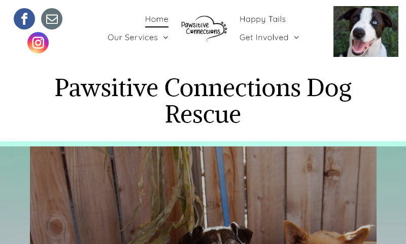 pawsitiveconnections.org