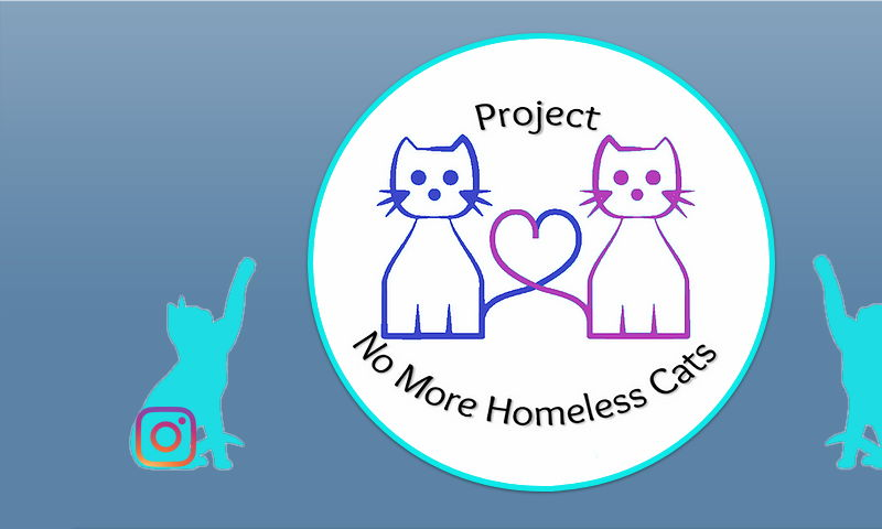 projectnomorehomelesscats.org