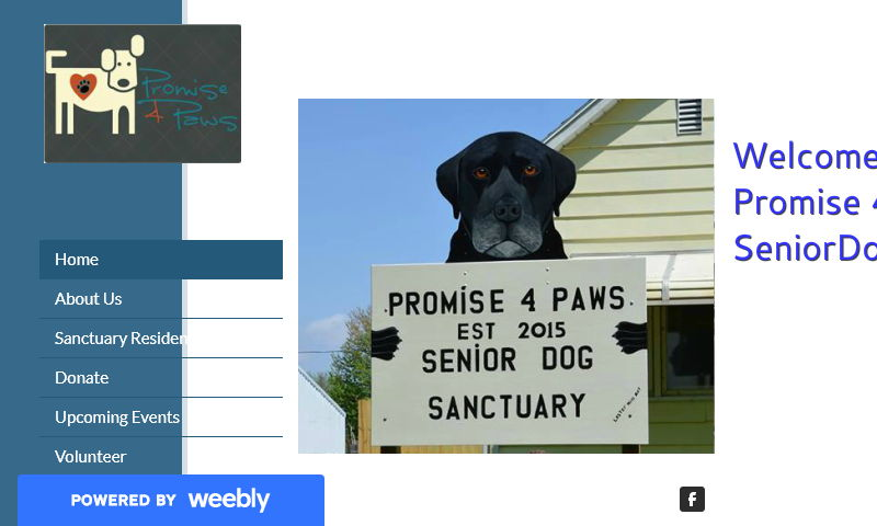 promise4paws.com