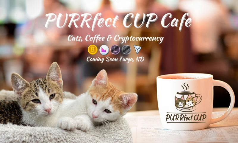 purrfectcup.cafe.jpg