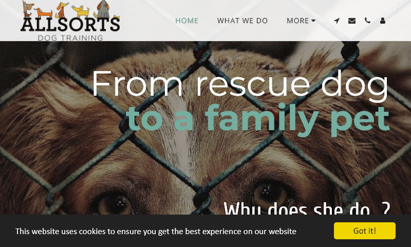 rescue-dog-to-family-pet.co.uk.jpg