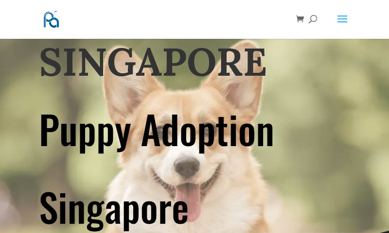 singaporepuppyadoption.com.jpg