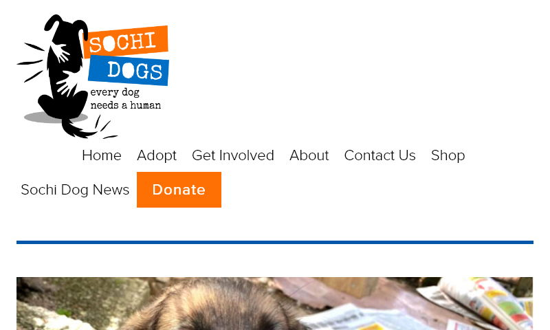 sochidogs.org