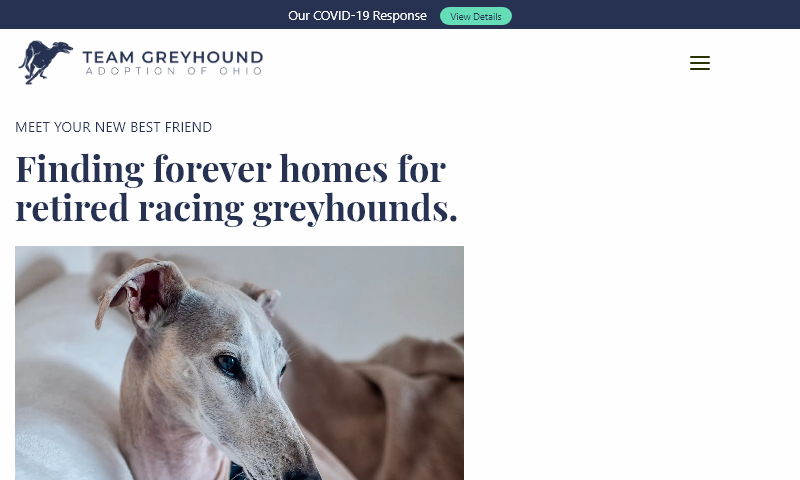 teamgreyhound.com