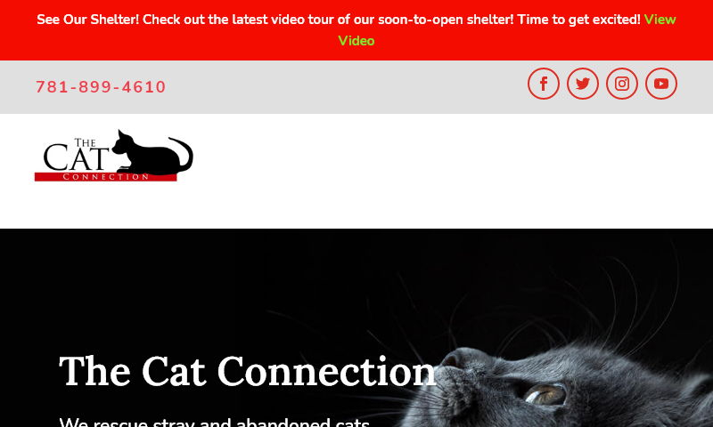 thecatconnection.org.jpg