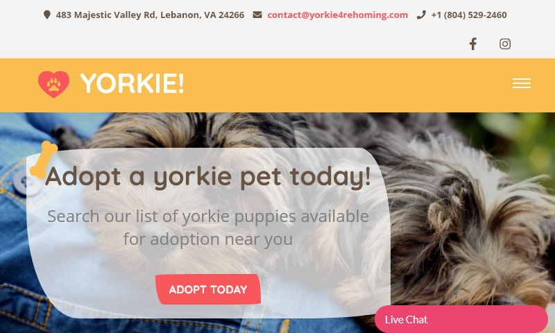 yorkie4rehoming.com